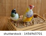 Two Different Gouldian Finches...