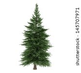 Tree Isolated. Picea Fir Tree