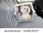 Stock photo small dog maltese sitting safe in the car on the back seat in a safety crate 145819217