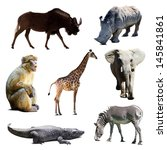 Set Of African Animals Over...