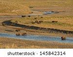 Buffalo In Yellowstone While...