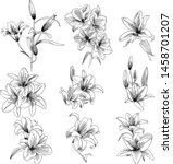 hand drawn lily vector vintage... | Shutterstock .eps vector #1458701207
