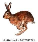 Stock photo european hare watercolor illustration hare runs isolated pattern on white background 1459101971