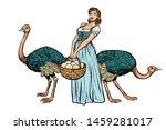 Ostrich Farm Eggs. Woman...