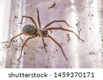 Domestic House Spider In Bright ...