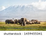 Small photo of Famous big tusker bull elephant Tim with family herd in front of Mt. Kilimanjaro in Amboseli, Kenya Africa