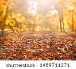 autumn leaves  background with... | Shutterstock . vector #1459711271