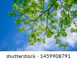 fresh green leaves with... | Shutterstock . vector #1459908791
