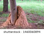 Big Anthill Or Termite Hill...