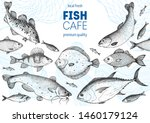 Fish Sketch Collection. Hand...