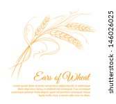 Wheat isolated on white. Vector illustration.