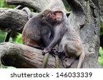 Two Monkeys Kiss