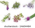 herbs. fresh green collection ... | Shutterstock . vector #14604484