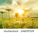 golden evening on the summer... | Shutterstock . vector #146059109