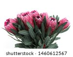 Protea Flowers Bunch. Blooming...
