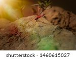Stock photo beautiful pink coloured dragonfly on a huge rock lens flare beautiful red pink dragonfly 1460615027
