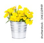 Yellow Flowers In Bucket....