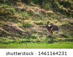 Stock photo hares running on field in sweden 1461164231