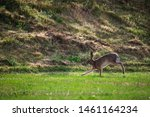Stock photo hares running on field in sweden 1461164234