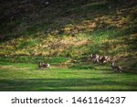 Stock photo hares running on field in sweden 1461164237