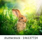 Rabbit. Beauty Art Design Of...