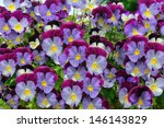 the flowers in the nature. | Shutterstock . vector #146143829