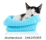 Small Kitten In Blue Knitting...