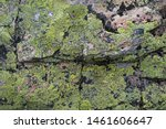 Lichens On Old Stone Surface...