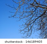 Tree branches without leaves against the blue sky - stock photo