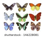 butterfly on white | Shutterstock . vector #146228081