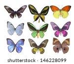 butterfly on white | Shutterstock . vector #146228099