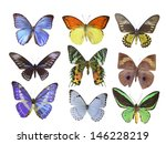 butterfly on white | Shutterstock . vector #146228219