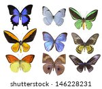 butterfly on white | Shutterstock . vector #146228231