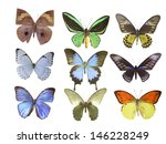 butterfly on white | Shutterstock . vector #146228249