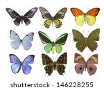 butterfly on white | Shutterstock . vector #146228255