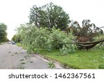 Small photo of storm damage aftermath.Damaged tree by hurricane wind after storm.storm damage tree.Tree's down on the Balcombe road.transformer on a electric poles and a tree laying across power lines over a road