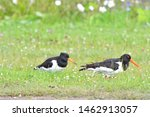 A Pair Of Black And White Pied...