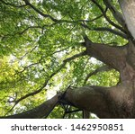 Plane Trees And Natural...