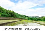 thailand rice farm.   Shutterstock . vector #146306099