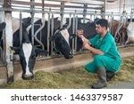 Stock photo cattle cow animal farm veterinary agriculture industry veterinarian or doctor communicating with 1463379587