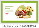 domestic birds landing page...