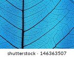 leaf ribs and veins as textured ... | Shutterstock . vector #146363507