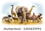 African Safari And Asian...