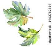 vine green leaf. leaf plant...   Shutterstock . vector #1463782934