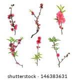 Peach Blossom Flower Collectio...