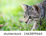 Stock photo kittens on green grass kitten looking at the victim free space to enter text 1463899664