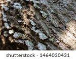 Fungi Growing On Decaying Tree...