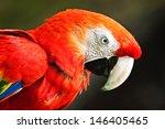 scarlet macaw  ara macao   | Shutterstock . vector #146405465