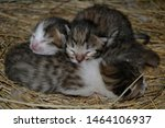 Stock photo little newborn kittens sleep in the nest of each other 1464106937