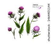 Hand Drawn Wild Hay Flower....
